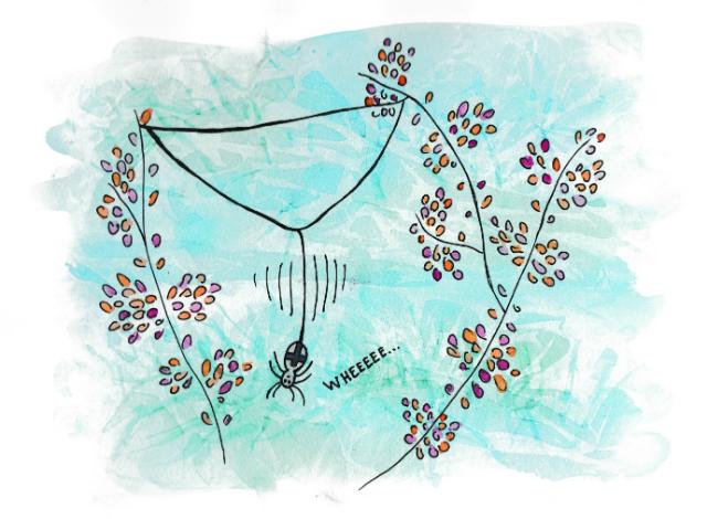 spin spint web tekening